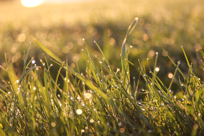 Dewdrops at sunrise on the Eastern Prom, Portland, Maine, this morning after the equinox and Libra New Moon. Photo by Amanda Painter.
