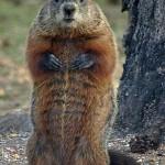 groundhog.jpg