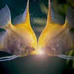 You might think of Pisces as the most sensitive sign and one closely involved with transitions of all kinds.