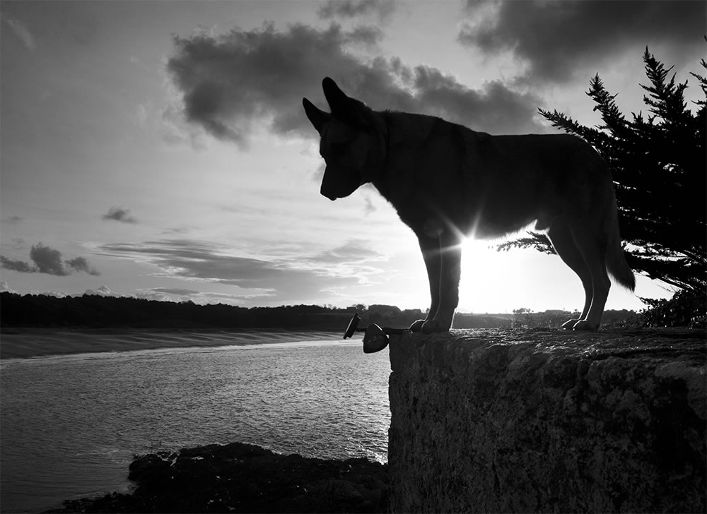 Bethune, the watch dog of Ile du Guesclin.  Brittany, France.