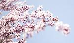 spring_5643thumb