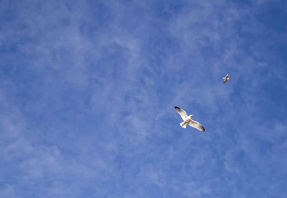 Seagulls in a calm sky over Belle Ile en Mer, France.