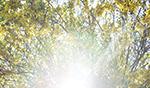 Light_1060034thumb