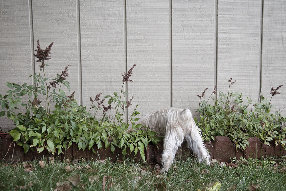Curiosity on four legs; something smells funny in here.