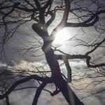 Tree_4467thumb