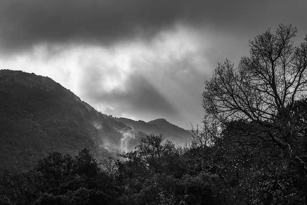 Sun through rain, smoke through mist, in the foothills of the Cévennes mountains, France.
