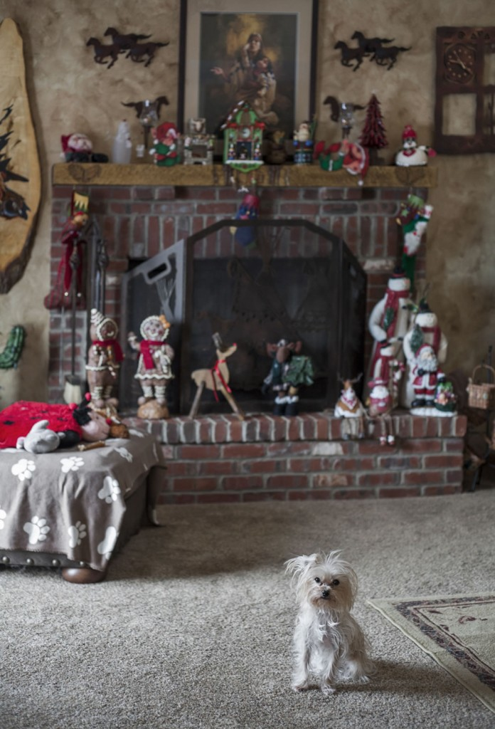Issi at home in front of the fireplace, full of expectations of Christmas treats.
