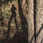 Legs_Trees_1209thumb