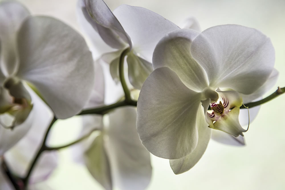 The blossom of an Aphrodite orchid, or a portal to another world?