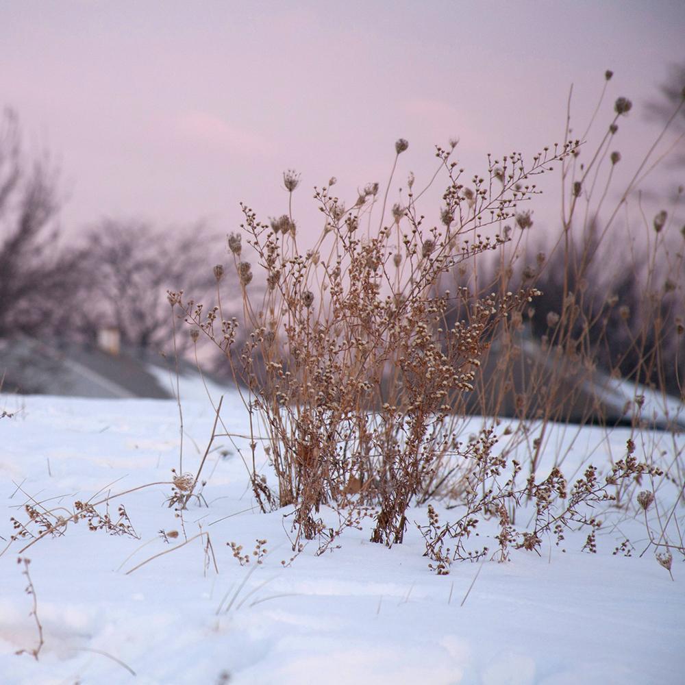 Sunrise along a frozen Midwestern pond.