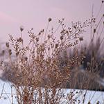 boulderhill_sunrise_0252thumb