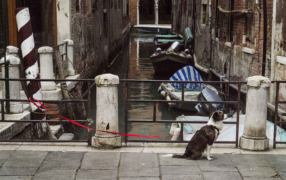 Venetian dog waiting for his owner's return.