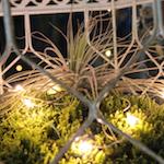 150+plantcage_sacredandprofane_Oct2016_IMG_7636
