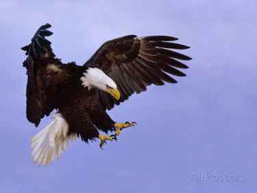375+eagle landing