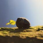 Snail at dawn; photo by Amanda Painter.