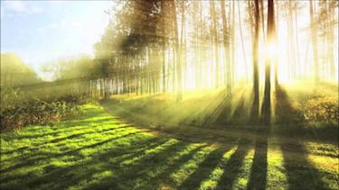 Sun through post-rain trees; photo via YouTube.