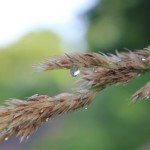 500+raindrop_grass1_July2017_IMG_9322