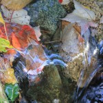 500+Acadia_stream_leaves_Oct2017_IMG_9589 copy