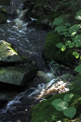 Babbling brook at Camp Timber Trails, Tolland, MA. Photo by Amanda Painter.