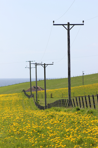 Utility poles in Orkney, Scotland, the day after Uranus ingressed Taurus in May 2018. Photo by Amanda Painter