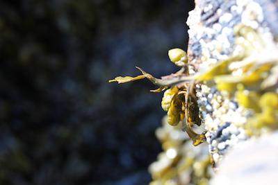 Seaweed pointing the way; photo by Amanda Painter.
